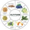 Altitude Gin Botanicals